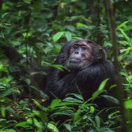 RZSS announces support for UN conservation initiative