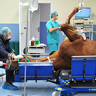 Anaesthetists sought for study into equine mortality
