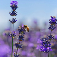 Public encouraged to take action to protect bees