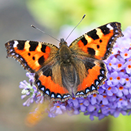 Big Butterfly Count 2021 gets underway