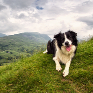 Vets in holiday hotspots 'busier than ever'