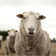 Sheep farmers urged to take action on wormer resistance