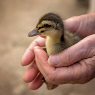 Born Free launches portal for wildlife care resources