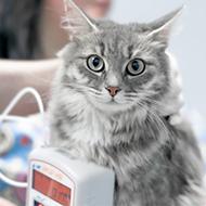 Vets urged to take feline blood pressure readings