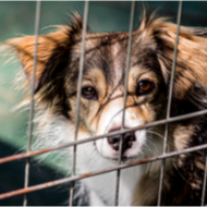 ADCH and Royal Canin highlight struggling animal rescues