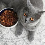 FSA issues update on feline pancytopenia