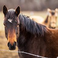 Strangles Awareness Week 2022 seeks veterinary ambassadors