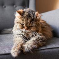 Cat study provides insight into dementia progress