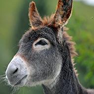 Equine News