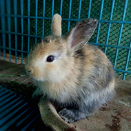 Almost half of UK rabbits live alone, report finds