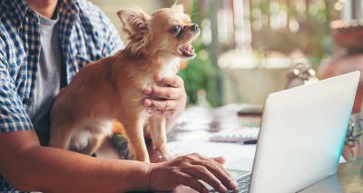 Charity reports rise in owners looking to give up their dog