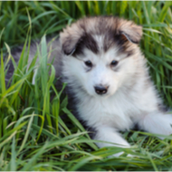 All-in-one genetic test available for five new breeds