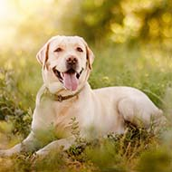 Study gives fresh insight into canine hepatobiliary disease