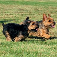 New resources for advising owners on puppy socialisation