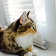 RVC issues latest feline pancytopenia update