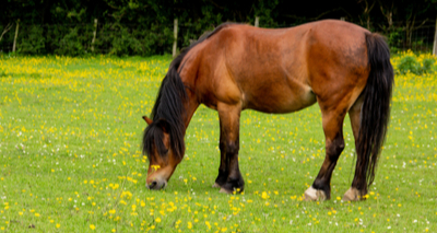 New slimming club for horses launched