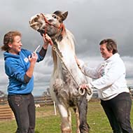 Tapeworm 'a significant pathogen in young horses'
