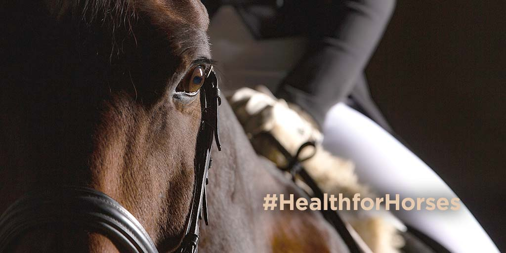 FEI launches 'Health for Horses' online campaign