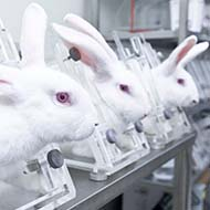Government to debate animal testing petition
