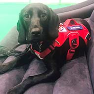 Rescue pup set to help veterans with PTSD