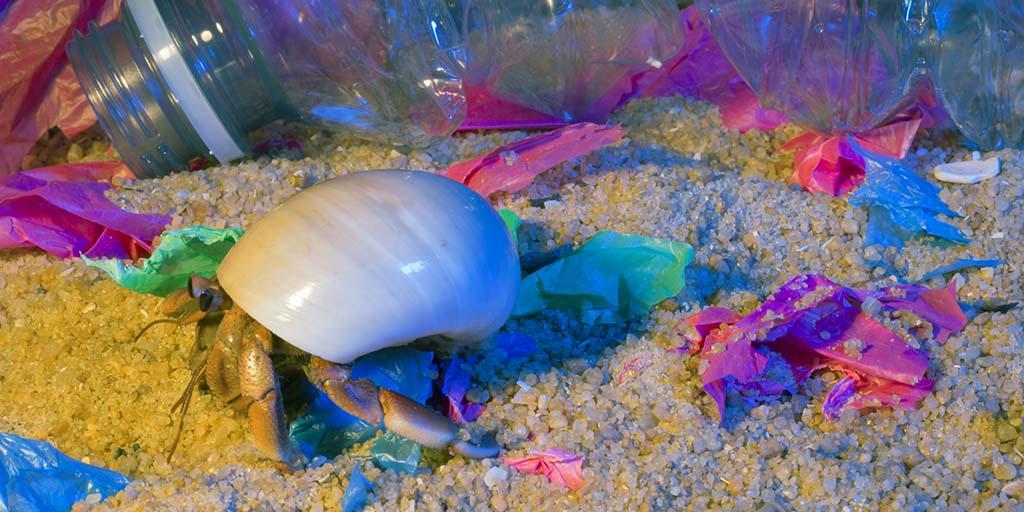 Hermit crab behaviour affected by microplastics
