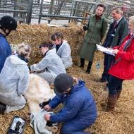 HRH The Princess Royal visits equine healthcare clinic