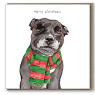 StreetVet launches charity Christmas cards