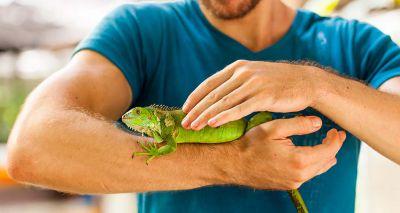 Exotic pets go under the spotlight at BVNA Congress