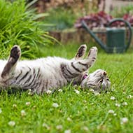 RVN shares tips on cat and wildlife-friendly gardening
